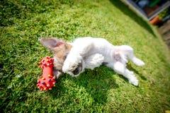Tenga un nuevo perrito Imagen de archivo libre de regalías