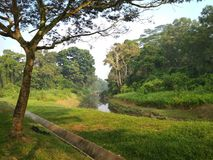 Tengah forest. Secondary rainforest provides a natural habitat in Tengah, west Singapore Royalty Free Stock Photography