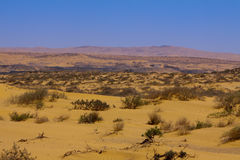 Tenggeli desert and grass Stock Photography