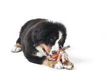 Tengo gusto de los juguetes Imagen de archivo libre de regalías