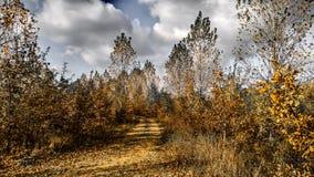 Tenha uma caminhada na floresta Fotografia de Stock Royalty Free
