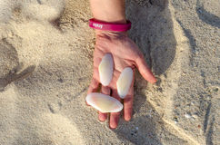 Tenir de grandes coquilles blanches disponible dans Aruba Photo libre de droits