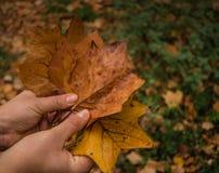 Tenir des feuilles en bois photo libre de droits