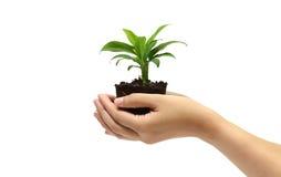 Tenir la plante verte dans la main Images libres de droits