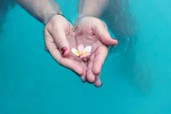 Tenir une fleur dans l'eau Photographie stock libre de droits