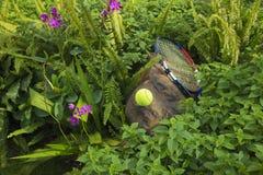 Tenisowa piłka na górze skały Pojęcie zielony i zdrowy Fotografia Royalty Free