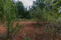 tenisowy s?d z drzewami zdjęcie royalty free