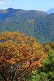 Tenjindaira à l'automne Images stock