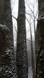 Tennesse Woods with Snow Stock Photo