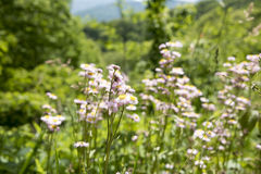Tennessee Flowers. Tennessee Mountains Green Trees and Blue Skiesn Royalty Free Stock Photography