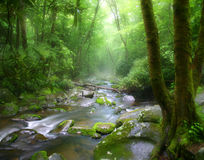 Tennessee Misty Stream Stock Images