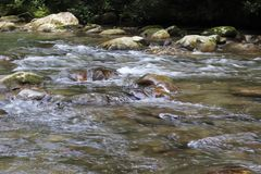 Tennessee Smoky Mountain Streams des Sommers stockfotos