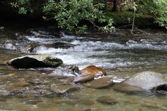 Tennessee Smoky Mountain Streams of Summer royalty free stock images