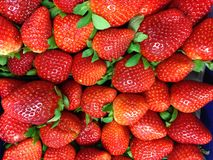 Tennessee strawberries. Flat of strawberries Stock Image