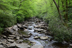 Tennessee Stream In The Woods. A view of a stream located in a lush green forest that is gentling rolling over rocks in smoky mountain national park Royalty Free Stock Photos