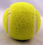 Tennis Ball. A dog toy tennis ball Stock Photo