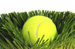 Tennis ball. On green grass Stock Photo