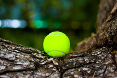 Tennis ball. Pucture of a tennis ball on a tree Royalty Free Stock Photos