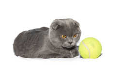 Tennis ball cat Royalty Free Stock Photos