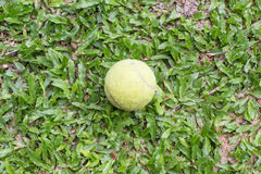 Tennis Ball. On the court Stock Photos