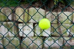 Tennis ball in fence Stock Photography