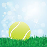 Tennis ball on grass Stock Photography