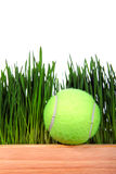 Tennis Ball on Grass background Royalty Free Stock Image
