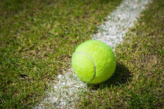 Tennis ball on a grass court Stock Image
