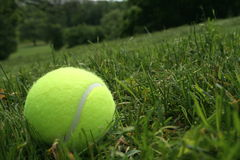Tennis ball on the grass Royalty Free Stock Image