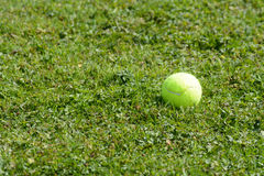 Tennis ball on grass in the park Royalty Free Stock Photos