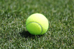 Tennis ball on grass tennis court Stock Image