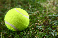 Tennis ball on green grass. Macro Royalty Free Stock Photography
