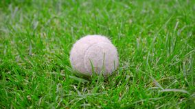 Tennis ball on green grass. Closeup of dog toy on green lawn. White tennis ball. Old ball on backyard. Dog toy outside stock video footage
