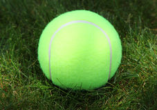Tennis ball on green grass Stock Photos