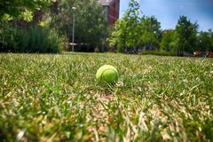 Tennis ball on green grass. Sport item stock photo