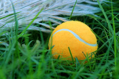 Tennis ball on green grass Stock Photo