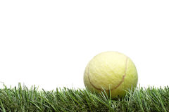 Tennis ball on the lawn. Against white background Royalty Free Stock Photo