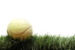 Tennis ball on the lawn. Against white background Royalty Free Stock Photos