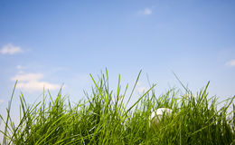 Tennis ball lost in grass Royalty Free Stock Images