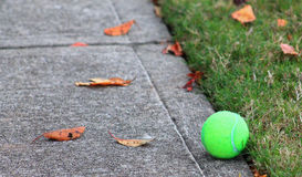 Tennis Ball Lost Stock Image