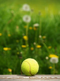 Tennis ball and meadow (46) Royalty Free Stock Image