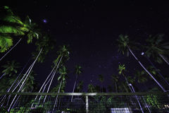 Tennis court under palms and starry sky Stock Image
