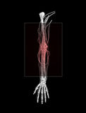 Tennis Elbow Royalty Free Stock Photography