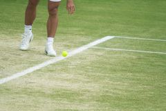 Tennis player bouncing ball. A professional tennis player bounces the tennis ball on the line before serving during the 2007 Wimbledon championships in London Royalty Free Stock Photos