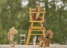 Tennis referee chair. Close up of  red squirrel with a bear on a tennis court Stock Images