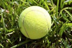 Tenniskugel auf grünem Gras Stockbilder