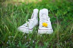 Tennisschoenen en madeliefje Stock Foto