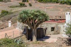 Teno Alto Mountains Vila típica com casas velhas Montes verdes cobertos com a urze e os louros Cacto, agave azul e gigante foto de stock royalty free