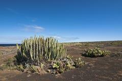 Teno Spitze Tenerife Stockfotos