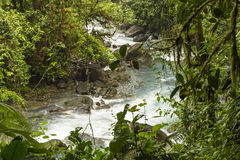 Tenoria Jungle River Royalty Free Stock Image